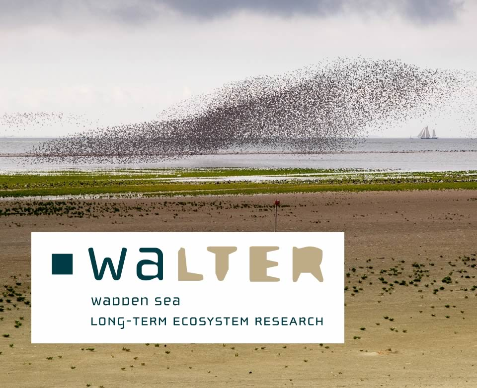 Naar: WaLTER - monitoring advisor and accespoint Wadden Sea data